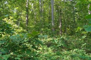 160 Acre Ozark Mountain Waterfall Hunting Tract in Stone, AR (21 of 49)