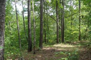 160 Acre Ozark Mountain Waterfall Hunting Tract in Stone, AR (24 of 49)