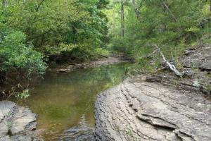 160 Acre Ozark Mountain Waterfall Hunting Tract in Stone, AR (12 of 49)