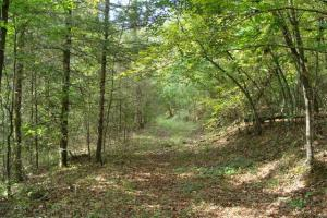 160 Acre Ozark Mountain Waterfall Hunting Tract in Stone, AR (17 of 49)