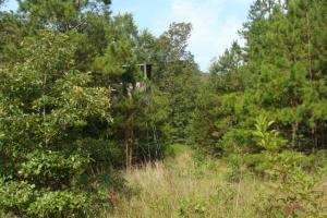 160 Acre Ozark Mountain Waterfall Hunting Tract in Stone, AR (16 of 49)