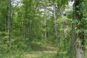 160 Acre Ozark Mountain Waterfall Hunting Tract in Stone, AR (23 of 49)