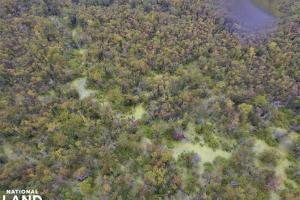 Maysville Timber Tract - Onslow County, NC