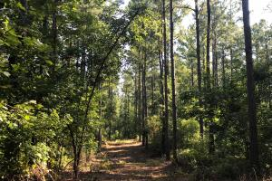 Rodgers Tract  - Clarendon County SC