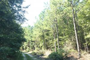 Shaw Timber & Rec Land in Clarendon, SC (8 of 16)