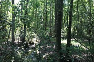 Shaw Timber & Rec Land in Clarendon, SC (11 of 16)