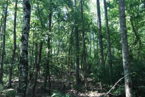 Shaw Timber & Rec Land in Clarendon, SC (12 of 16)