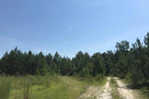 Shaw Timber & Rec Land in Clarendon, SC (14 of 16)