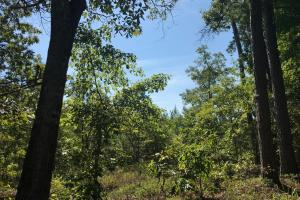 Shaw Timber & Rec Land in Clarendon, SC (2 of 16)