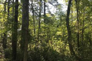Shaw Timber & Rec Land in Clarendon, SC (3 of 16)