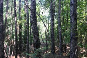 Shaw Timber & Rec Land in Clarendon, SC (6 of 16)