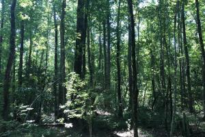 Shaw Timber & Rec Land in Clarendon, SC (13 of 16)