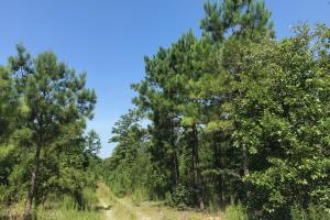 Shaw Timber & Rec Land in Clarendon, SC (15 of 16)