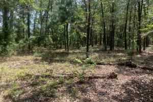 Roseboro Hunting Land & Homesite - Sampson County, NC
