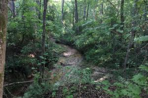 Old Metal Road Hunting, Recreation and Timber Tract in Cherokee, SC (10 of 39)