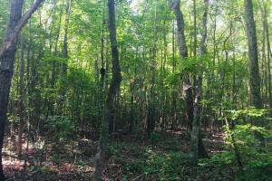 Old Metal Road Hunting, Recreation and Timber Tract in Cherokee, SC (32 of 39)