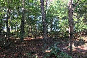 Old Metal Road Hunting, Recreation and Timber Tract in Cherokee, SC (14 of 39)