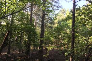 Old Metal Road Hunting, Recreation and Timber Tract in Cherokee, SC (13 of 39)