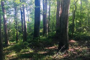 Old Metal Road Hunting, Recreation and Timber Tract in Cherokee, SC (33 of 39)