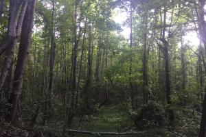 Old Metal Road Hunting, Recreation and Timber Tract in Cherokee, SC (22 of 39)