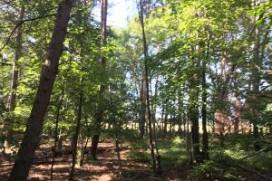 Old Metal Road Hunting, Recreation and Timber Tract in Cherokee, SC (17 of 39)