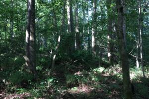 Old Metal Road Hunting, Recreation and Timber Tract in Cherokee, SC (12 of 39)