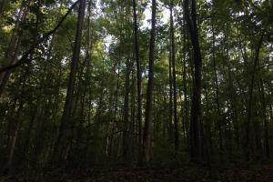 Old Metal Road Hunting, Recreation and Timber Tract in Cherokee, SC (8 of 39)