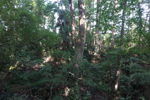 Old Metal Road Hunting, Recreation and Timber Tract in Cherokee, SC (9 of 39)
