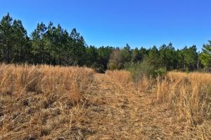 Gateswood South Homesite and Mini Farm - Baldwin County AL