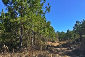 Gateswood North Homesite and Mini Farm - Baldwin County AL