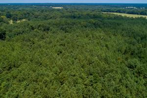 Heavily timbered tract on 36 acres in Red River County.  (7 of 11)