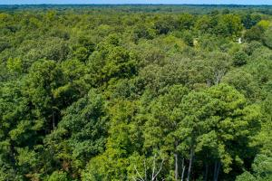 36 acre timber tract. Wildlife's paradise in Red River County.  (10 of 11)