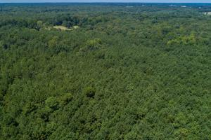 Marketable timber on 36 acres near the Red River (11 of 11)