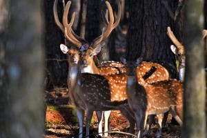 The Highway 98 Axis Deer Trophy Retreat  - George County MS