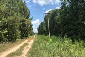 Alcolu Whitetail Property - Clarendon County SC