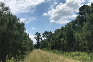 Alcolu Whitetail Property in Clarendon, SC (2 of 9)