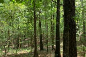 Hunting and Timber Investment Opportunity - Holmes County MS