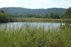 Residence Quality Cropland Recreational Lake  in Knox, KY (6 of 51)