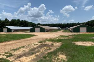 Chicken Farm Near Mize, Mississippi - Smith County MS