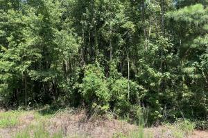 US Hwy 13 Timberland & Hunting Opportunity in Wayne, NC (9 of 12)