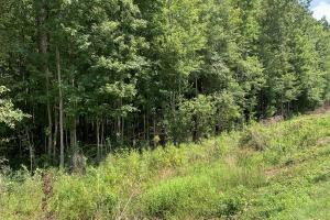US Hwy 13 Timberland & Hunting Opportunity in Wayne, NC (10 of 12)