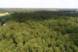 US Hwy 13 Timberland & Hunting Opportunity in Wayne, NC (8 of 12)