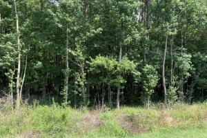 US Hwy 13 Timberland & Hunting Opportunity in Wayne, NC (12 of 12)