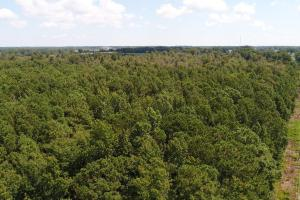 US Hwy 13 Timberland & Hunting Opportunity in Wayne, NC (1 of 12)