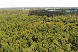 US Hwy 13 Timberland & Hunting Opportunity in Wayne, NC (4 of 12)
