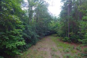 Fayetteville 10+/- Ac Homestead in Cumberland, NC (3 of 9)