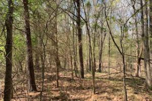 Red Hill Tract 172.7 - Panola County MS