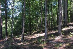 Columbiana Mountain Top Homesites & Timber in Shelby, AL (36 of 37)