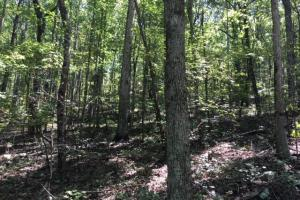 Columbiana Mountain Top Homesites & Timber in Shelby, AL (32 of 37)