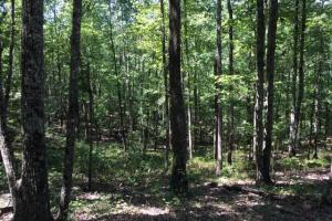 Columbiana Mountain Top Homesites & Timber in Shelby, AL (25 of 37)